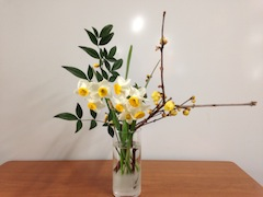 香を放つ水仙と蝋梅