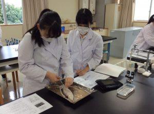 イカの解剖1