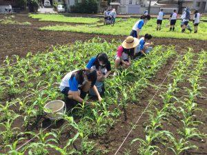 畑の除草作業2