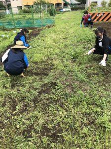 畑の除草作業1