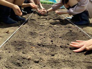 種まきをしている手